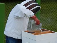 apiary construction
