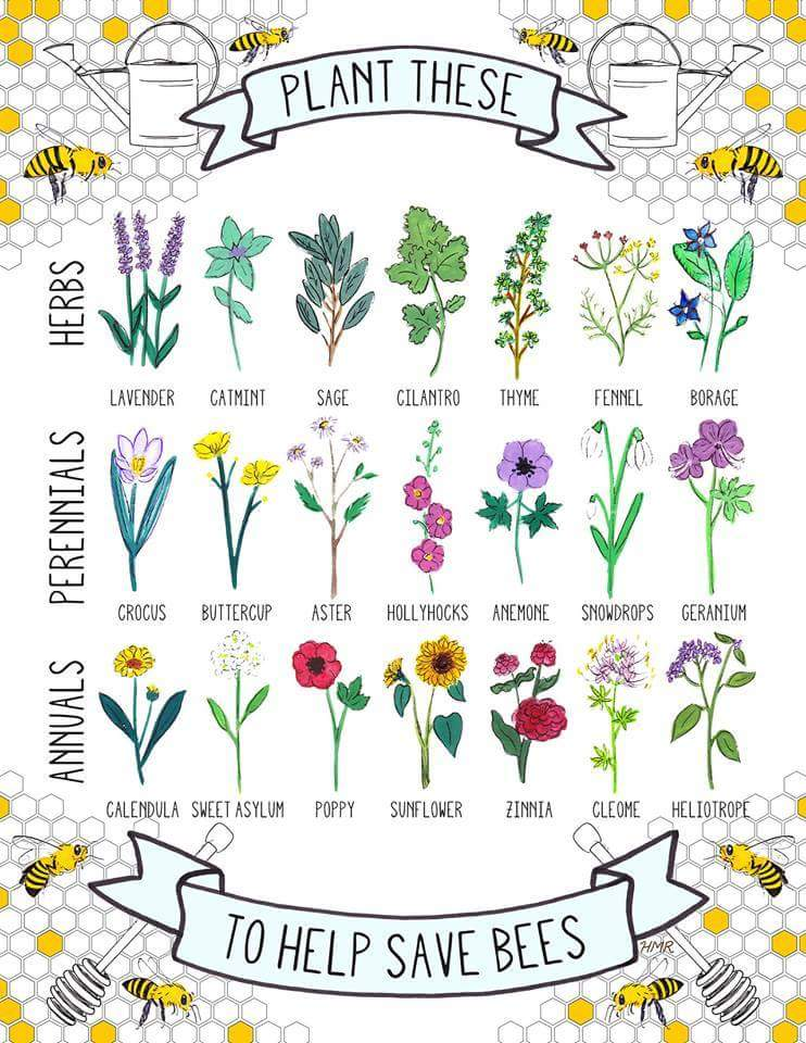 Saving Bees Poster